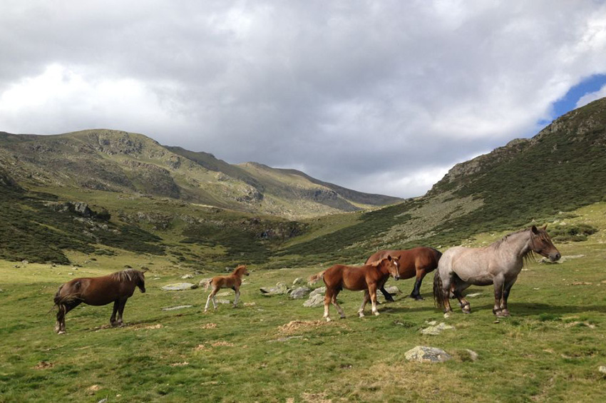 lost-pyrenees-5